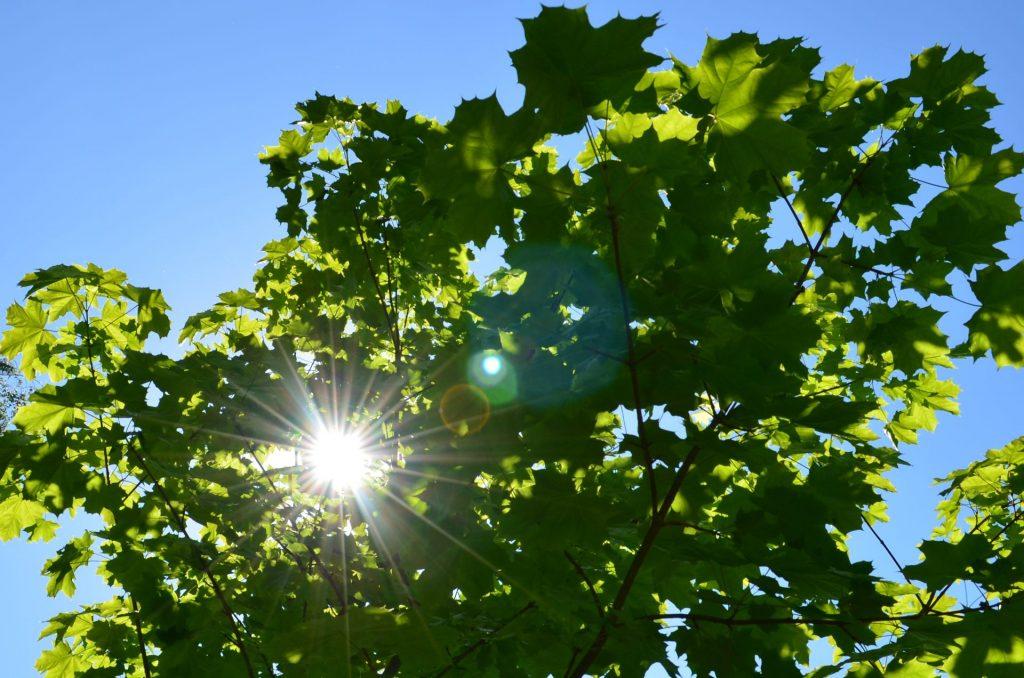 Blätterdach im Sommer
